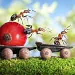 Karıncalar Öldürmeden Nasıl Uzaklaştırılır 2