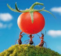 Karıncalar Öldürmeden Nasıl Uzaklaştırılır 3
