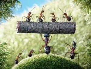 Karıncalar Öldürmeden Nasıl Uzaklaştırılır 4