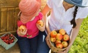 Meyvelerin Uzun Süre Bozulmaması İçin Ne Yapılabilir 1