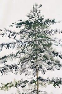 Çam Ağacı Nasıl Çizilir ? 12