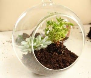 Minyatür Bahçe Yapılışı 15