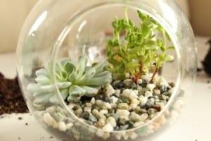 Minyatür Bahçe Yapılışı 16