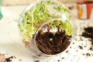 Minyatür Bahçe Yapılışı 2