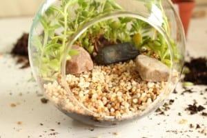 Minyatür Bahçe Yapılışı 3