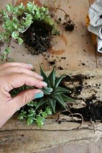 Minyatür Bahçe Nasıl Yapılır ? 10