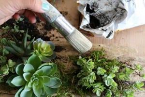 Minyatür Bahçe Nasıl Yapılır ? 11