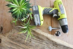 Minyatür Bahçe Nasıl Yapılır ? 3