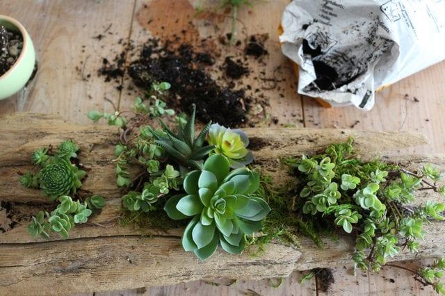 Minyatür Bahçe Nasıl Yapılır ? 4