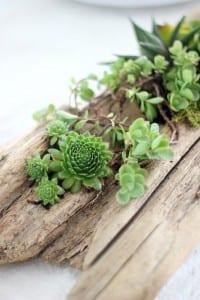 Minyatür Bahçe Nasıl Yapılır ? 7