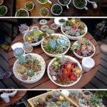 +75 Küçük Hobi Bahçeleri, Hayal Bahçeleri 32