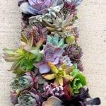 +75 Küçük Hobi Bahçeleri, Hayal Bahçeleri 44