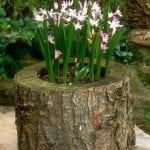 +75 Küçük Hobi Bahçeleri, Hayal Bahçeleri 66