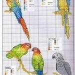 Etamin Şablonları Kuş Desenleri 78