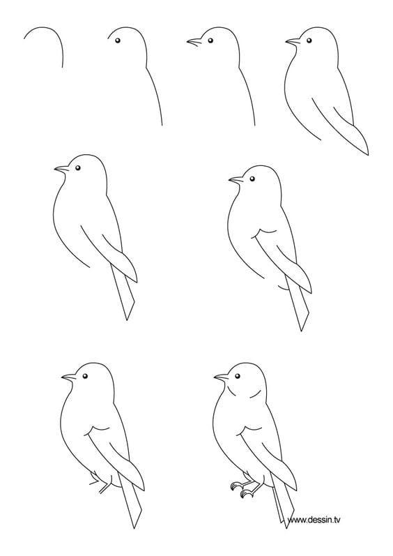 Hayvan Resimleri Nasıl Çizilir? 53