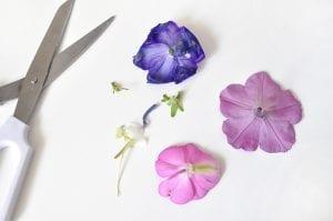 DIY, Canlı Çiçekten Çanta Yapılışı 6