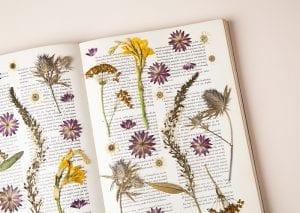 DIY, Canlı Çiçekten Pano Yapılışı 5