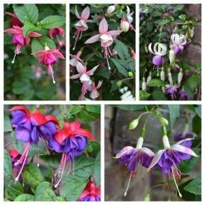 Küpe Çiçeği Motifli Battaniye Nasıl Yapılır? 5