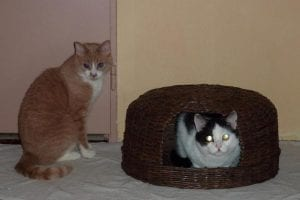 Gazeteden Kedi Evi Yapımı 44