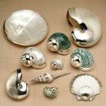 Deniz Kabuğu Boyama Örnekleri 22