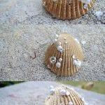 Deniz Kabuğu Boyama Örnekleri 69