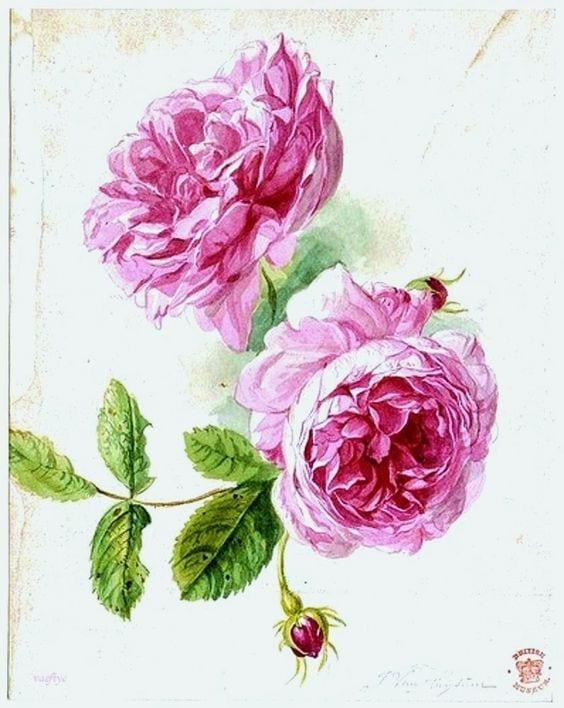 Dekupaj için Çiçek Resimleri 33