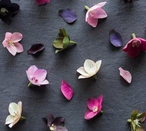 Grapon Kağıdı ile Çiçek Yapımı