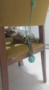 Kedi Oyuncakları El Yapımı 2