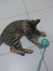 Kedi Oyuncakları El Yapımı 5
