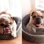 Penye İpten Köpek ve Kediler İçin Yatak Yapımı