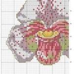 Kanaviçe Orkide Şablonları 12