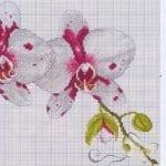 Kanaviçe Orkide Şablonları 15