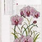 Kanaviçe Orkide Şablonları 17