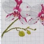 Kanaviçe Orkide Şablonları 22