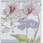 Kanaviçe Orkide Şablonları 30