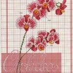 Kanaviçe Orkide Şablonları 34