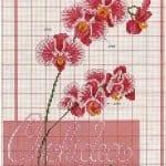 Kanaviçe Orkide Şablonları 35