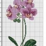 Kanaviçe Orkide Şablonları 38