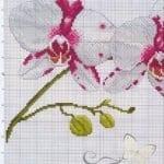 Kanaviçe Orkide Şablonları 39