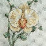 Kanaviçe Orkide Şablonları 43