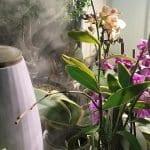 Orkide Çiçeğinin Bakımı 3