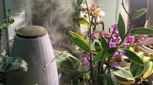 Orkide Çiçeğinin Bakımı