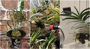 Orkide Çiçeğinin Bakımı 6