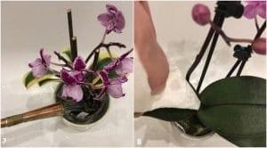 Orkide Çiçeğinin Bakımı 8
