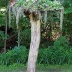 Ağaç Kütüğünde Teraryum 104