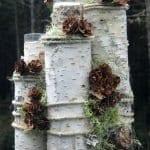 Ağaç Kütüğünde Teraryum 10