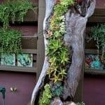 Ağaç Kütüğünde Teraryum