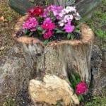 Ağaç Kütüğünde Teraryum 15