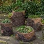 Ağaç Kütüğünde Teraryum 27
