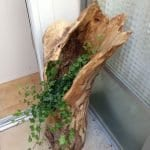 Ağaç Kütüğünde Teraryum 32